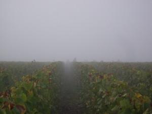 """La météo a été magnifique tout au long de cette vendange,   mais notre équipe était cachée dans la brume ce matin à """"La Pointe"""""""